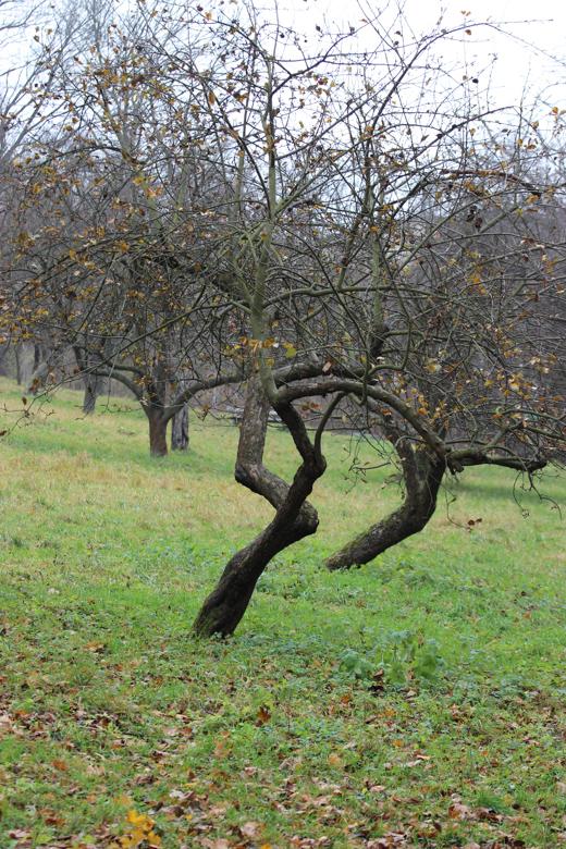 Деревья, которые хотели ходить